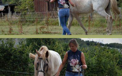 Simple mission, conduire votre cheval de A à B? Pas toujours…