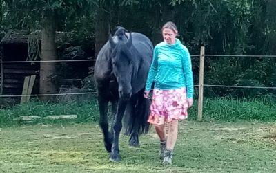 Mini-stage : créer une véritable connexion avec votre cheval