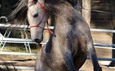 HELP! Mon cheval est dominant!
