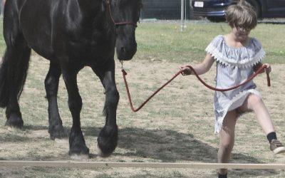 Cassez le problème avec votre cheval en petits morceaux